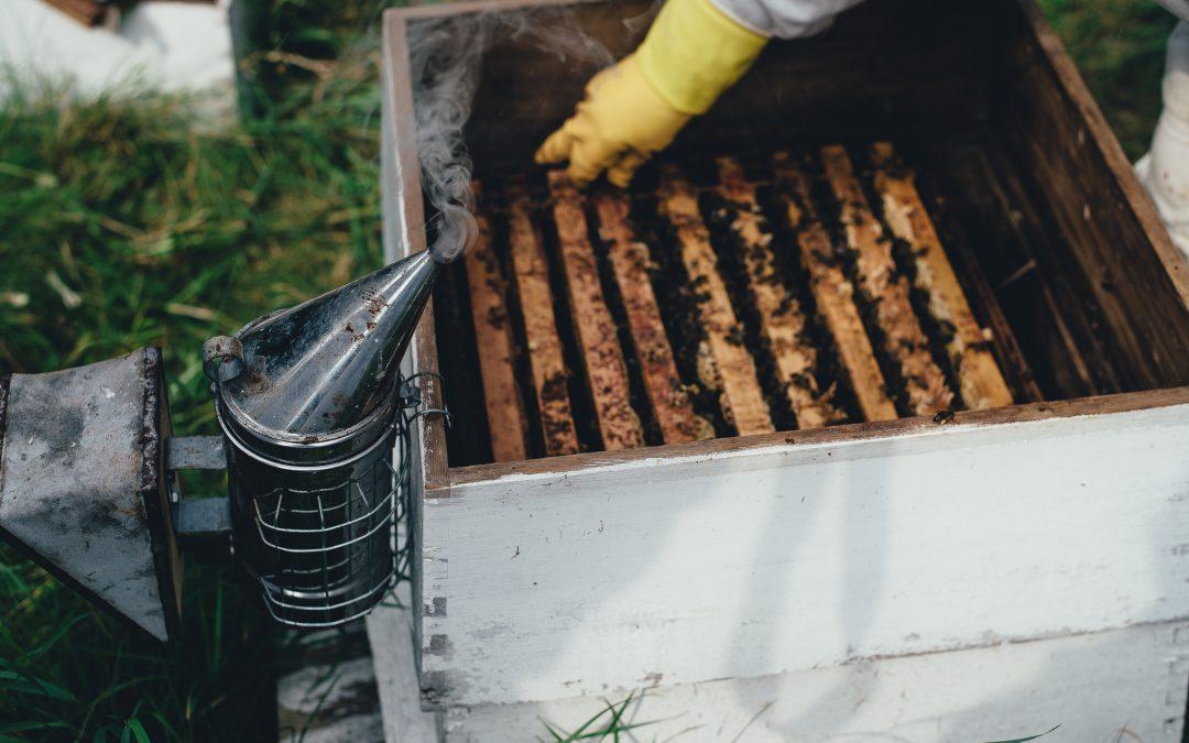 Honey market shares in China
