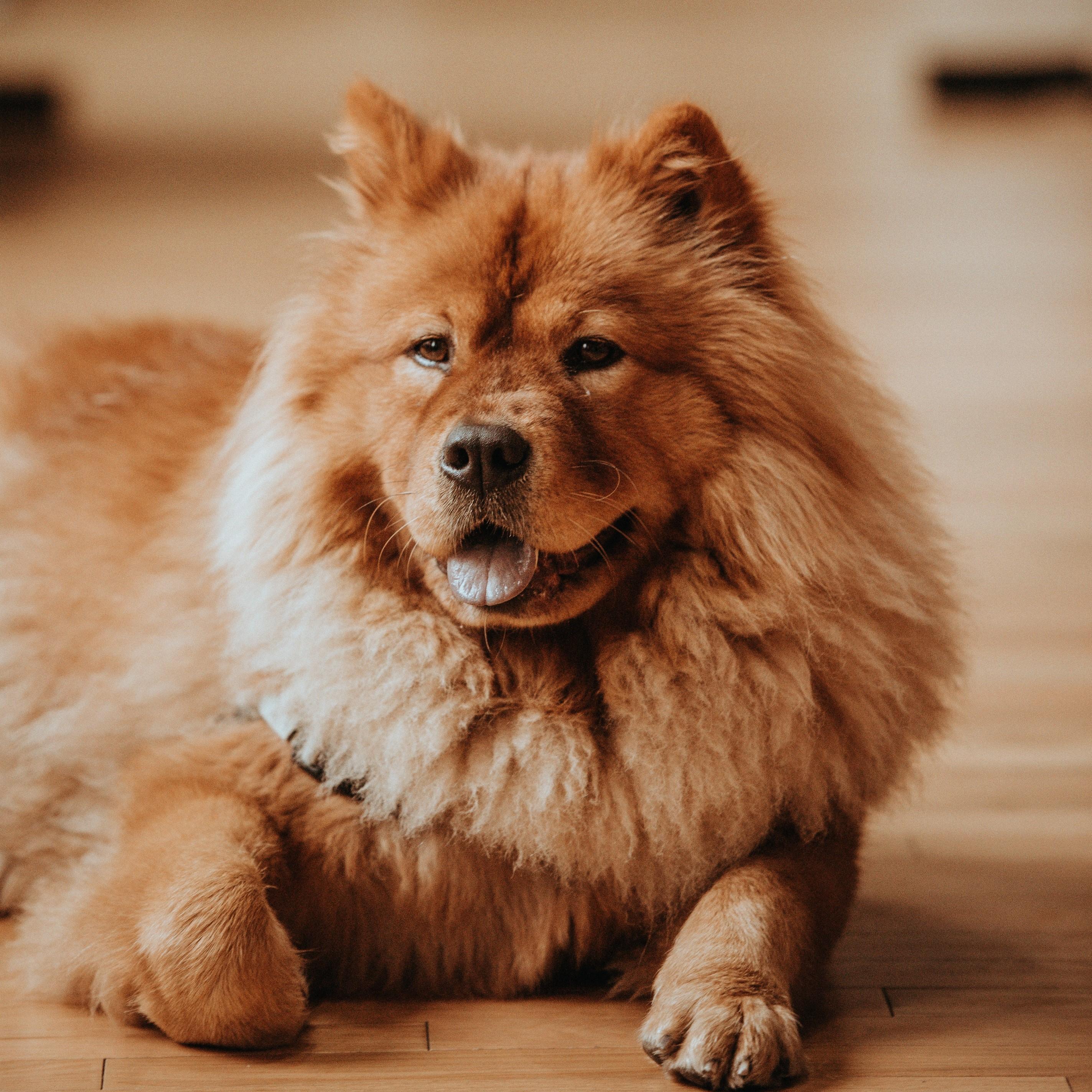dog China